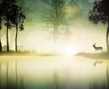 Daim-dans-le-brouillard