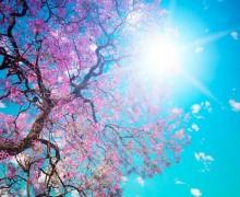 arbre-en-fleur-dans-le-soleil