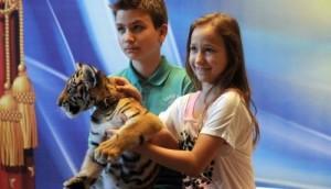 enfants-et-tigre