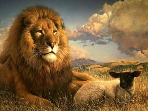 lion-et-brebis