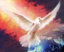 colombe-de-paix
