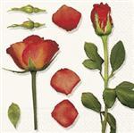 bouton-de-rose