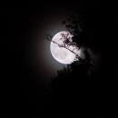 Lune de nuit