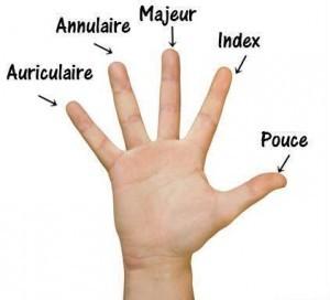 doigts de la main