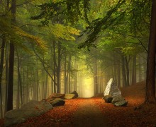 sentiers-forestiers