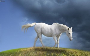 cheval-blanc,-nuages-170894