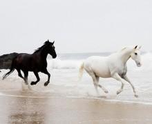 jim-hordan-bridal-horse-08