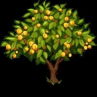 Apricot_Tree