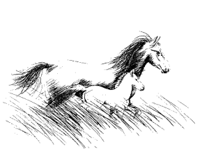 cheval-sauvage