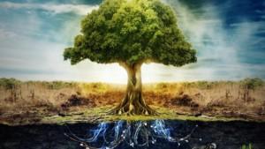 tree-640x360