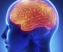 cerveau-humain-human-brain