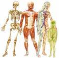 corps-humain-human-body