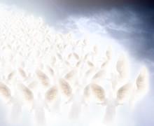 descente-des-anges