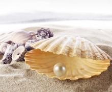 Pearl_Shells_Closeup_508240