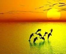 joie-dauphins