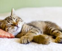 paresse-chaton-dort